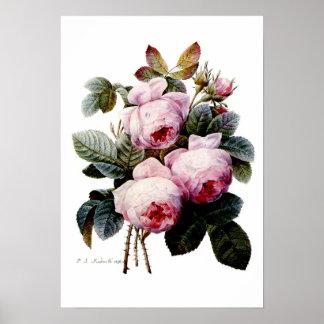 Rosas por Redoute Póster
