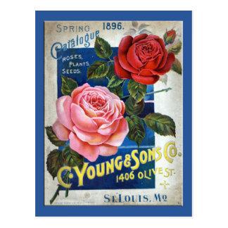 Rosas Postales
