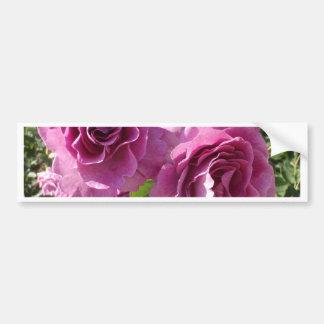 Rosas púrpuras etiqueta de parachoque