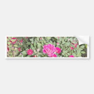 Rosas púrpuras pegatina de parachoque
