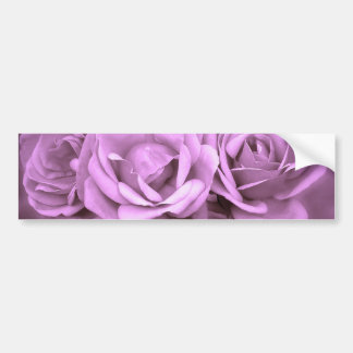 Rosas púrpuras del vintage pegatina para auto