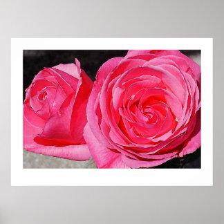 Rosas que suben rosados impresiones