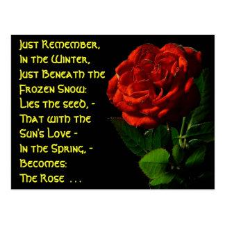 Rosas que suben… tarjetas postales