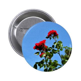 Rosas rojos brillantes pin