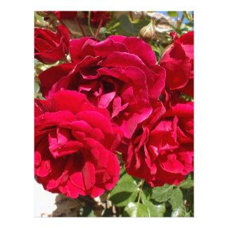 Rosas rojos en la floración membrete