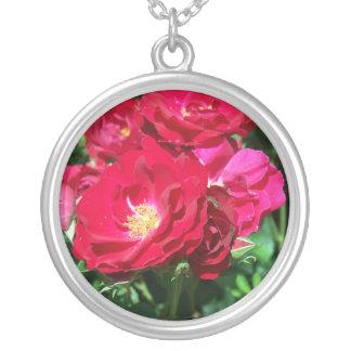 Rosas rojos en un collar de Bush