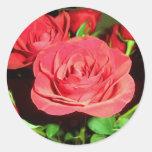 Rosas rojos etiquetas redondas
