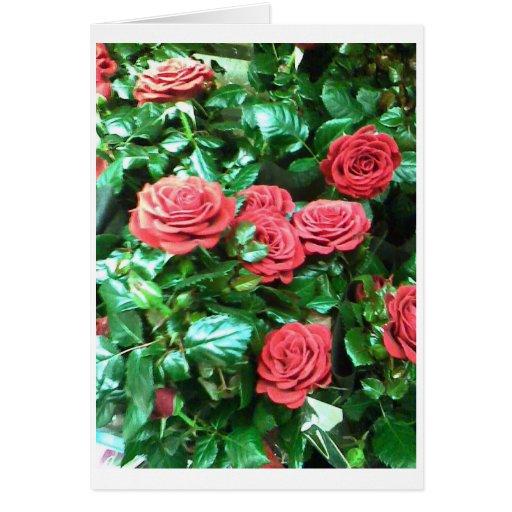 Rosas rojos felicitacion