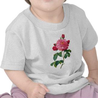 Rosas rojos hermosos de Rosa Gallica por Redoute Camisetas