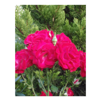 Rosas rojos hermosos plantillas de membrete