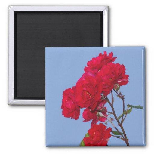 Rosas rojos imanes para frigoríficos