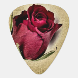Rosas rojos majestuosos en fondo pardusco púa de guitarra