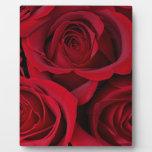 Rosas rojos placa para mostrar