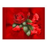Rosas rojos postal
