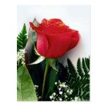 Rosas rojos postales