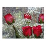 Rosas rojos tarjeta postal