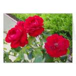 Rosas rojos tarjetón