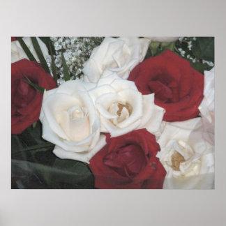 Rosas rojos y blancos posters