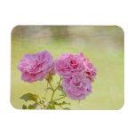 Rosas románticos del jardín iman