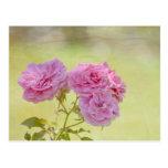 Rosas románticos del jardín tarjeta postal