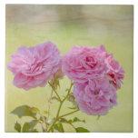 Rosas románticos del jardín teja