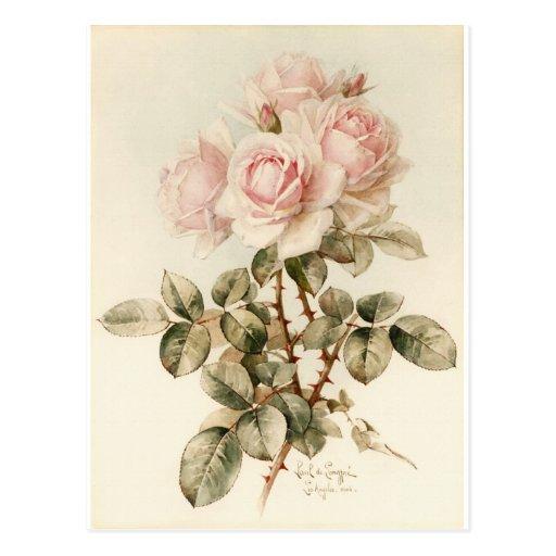 Rosas románticos del Victorian del vintage Postales