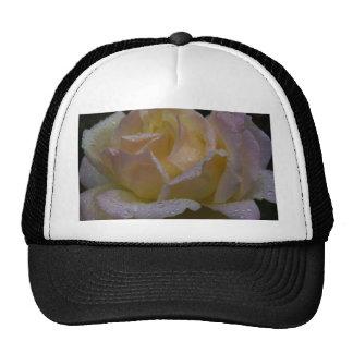 Rosas Rosa, sombra oscura Gorra