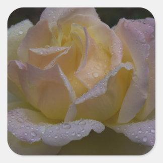 Rosas Rosa, sombra oscura Pegatina Cuadrada