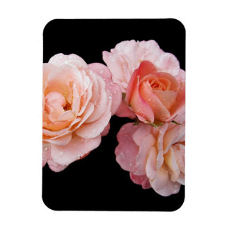 Rosas rosados amelocotonados iman rectangular