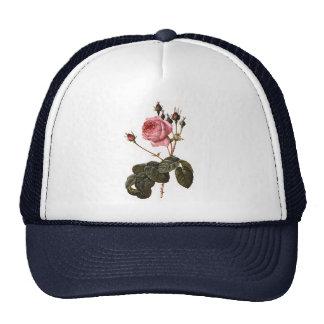 Rosas rosados antiguos del jardín del vintage en gorra