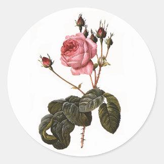 Rosas rosados antiguos del jardín del vintage en l etiquetas redondas