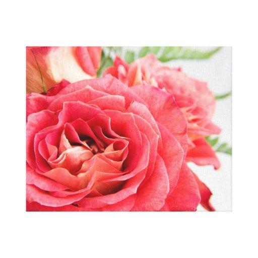 Rosas rosados aterciopelados lona estirada galerias