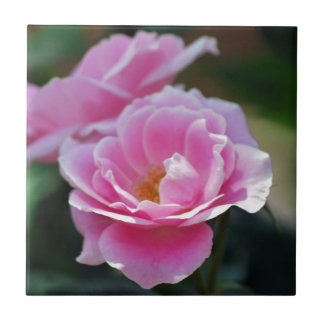 Rosas rosados bonitos azulejo cuadrado pequeño
