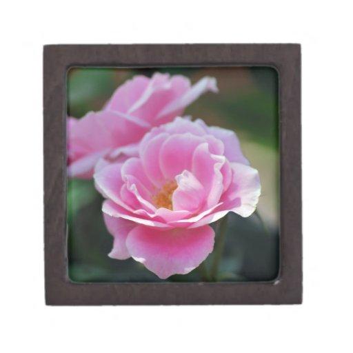 Rosas rosados bonitos cajas de regalo de calidad