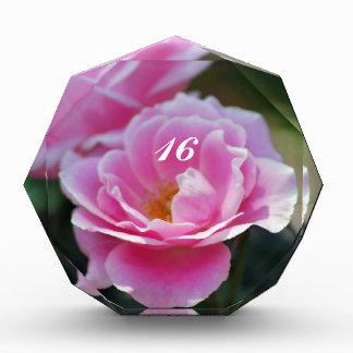 Rosas rosados bonitos dieciséis