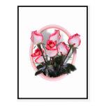 Rosas rosados bonitos postal