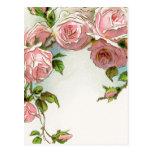 Rosas rosados colgantes postal