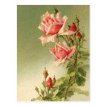 Rosas rosados del jardín del vintage para el el dí tarjetas postales