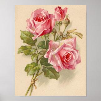 Rosas rosados del vintage póster