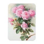 Rosas rosados del vintage que pintan el imán