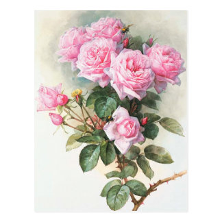 Rosas rosados del vintage que pintan la postal