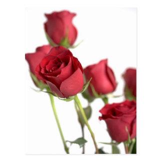 Rosas rosados elegantes postales