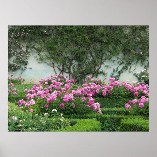 Rosas rosados elegantes póster
