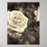 Rosas rosados en Anzures 1 Antiqued Poster