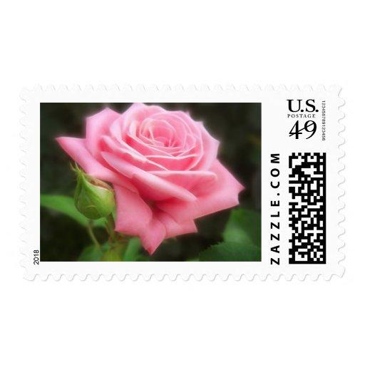 Rosas rosados en Anzures 3 Timbre Postal