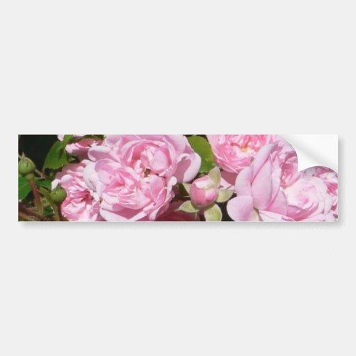 Rosas rosados en el jardín de Bush Pegatina Para Auto