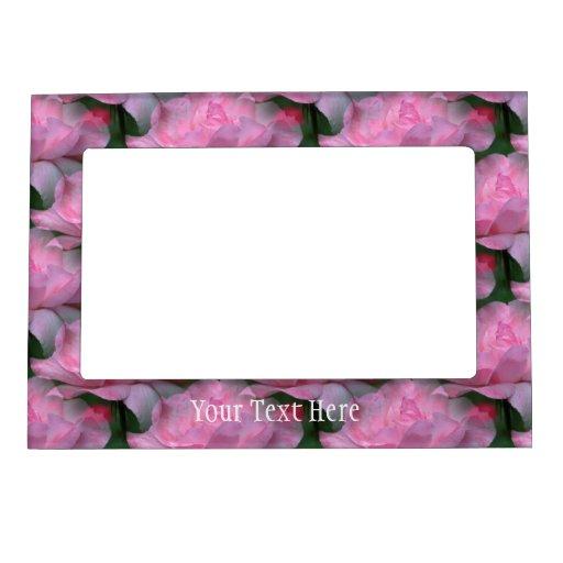Rosas rosados en marco magnético de la flor de la  marcos magnéticos