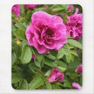 Rosas rosados en Mousepad