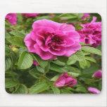 Rosas rosados en Mousepad Alfombrilla De Ratón