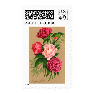 Rosas rosados florales del vintage lindo franqueo